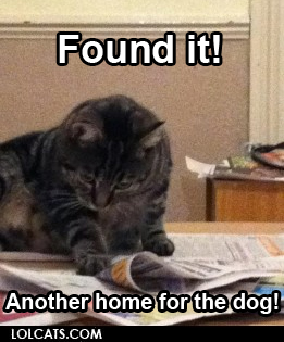 lolcatsdotcom-found-it